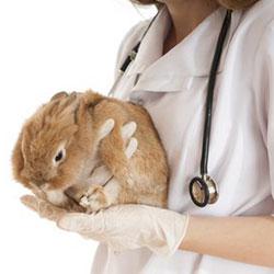 Кострома станция по борьбе с болезнями животных
