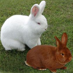 Скачать Торрент Кролики - фото 5
