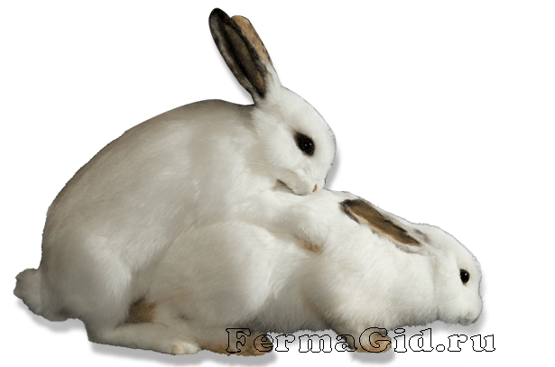 Скачать Торрент Кролики - фото 7
