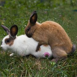 В каком возрасте забивают кроликов