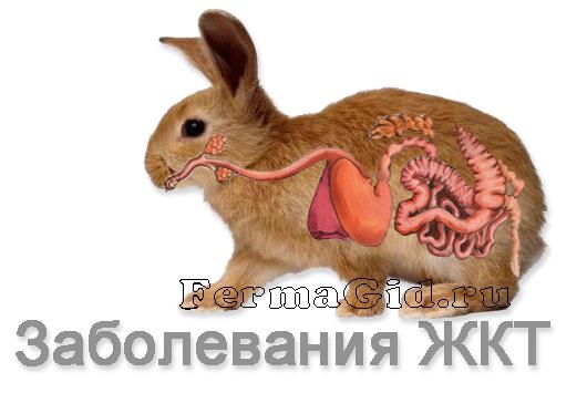 Болезни кроликов: симптомы, профилактика, лечение, фото