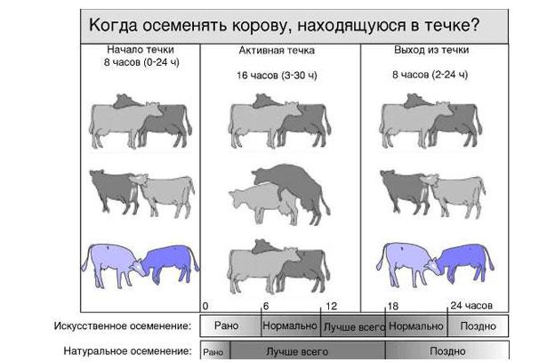 Инструкция По Искусственному Осеменению Коров img-1