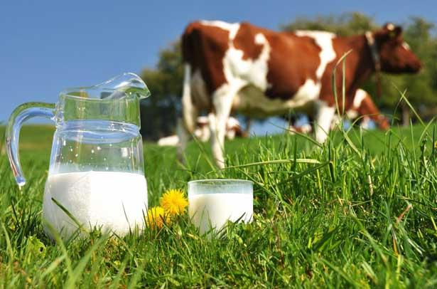 жирность молока у коровы летом и зимой