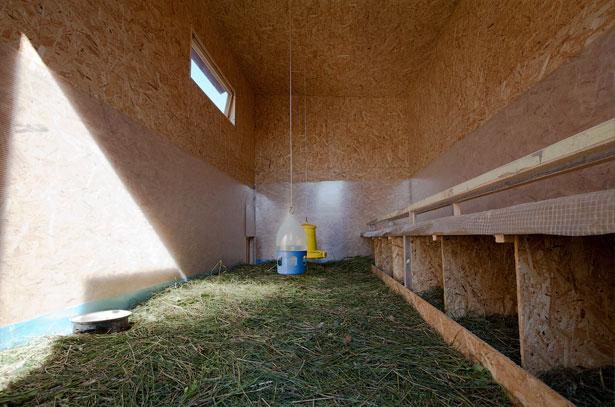 Гнезда для несушек в курятнике так же важны, как насесты