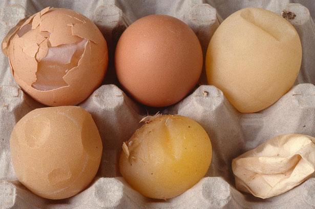 Скорлупа у яиц мягкая что делать 76