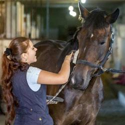 Девушка чистит коня