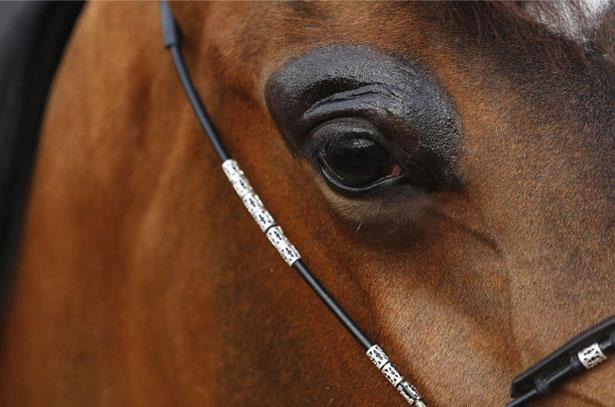 Чувства и память лошади