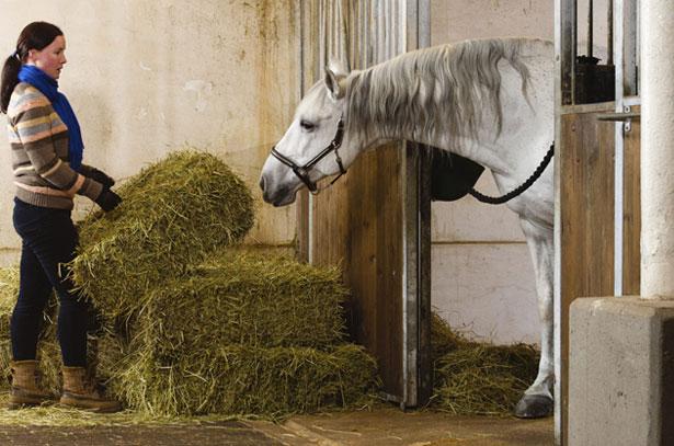 Девушка держит в руках сено для коня в конюшне