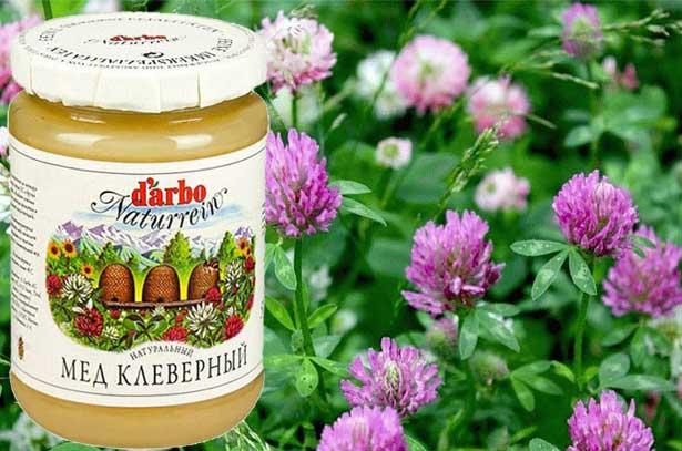 фото клеверный мёд