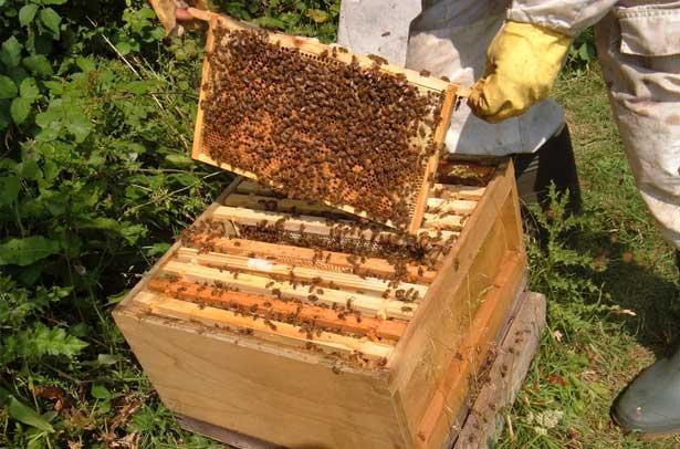 купить улей для пчел цена в псковской области нужны тесты грамматике