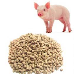 комбикорм свиньям