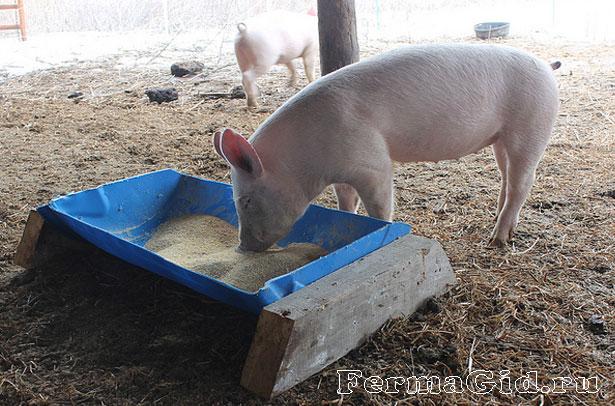 Кормушка для свиней из бочки своими руками