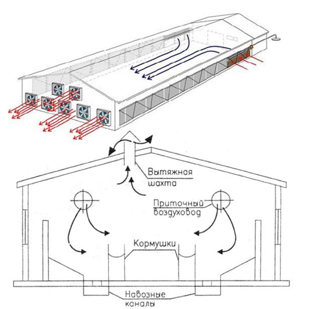 Вентиляция в свинарнике схема